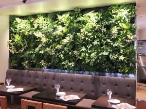 壁一面に張り巡らされた緑の植物たちはなんと全て本物!