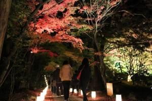 秋季賞楓季節,松島的圓通院也會點上燈飾,吸引許多賞楓客