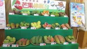 芒果品種繁多