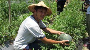 親親果農場的西瓜